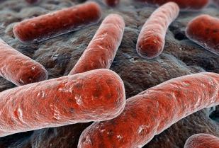 Linee guida per la diagnosi, terapia, prevenzione e controllo della tubercolosi