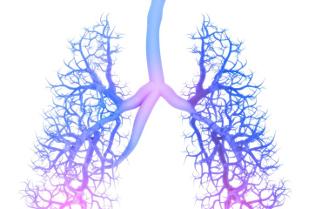 Linee guida per la diagnosi e la terapia della broncopneumopatia cronica ostruttiva negli adulti